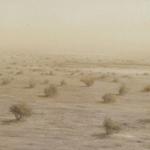 El desierto cercano. 1993. Óleo / tabla 60 x 180 cm.